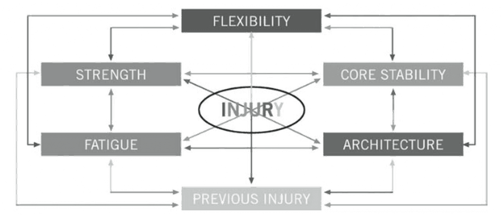 Muscle strain injuries model