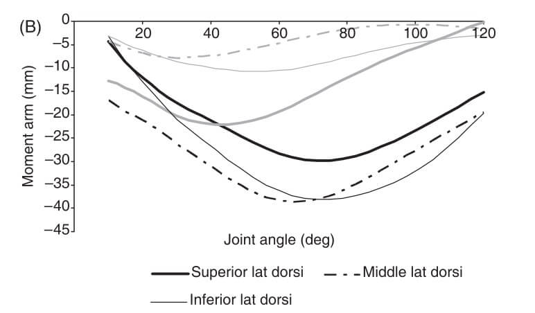 From Ackland, 2008. The gray lines are the flexor/extensor moment arms (negative is extension, positive is flexion), and black lines are abduction/adduction moment arms.