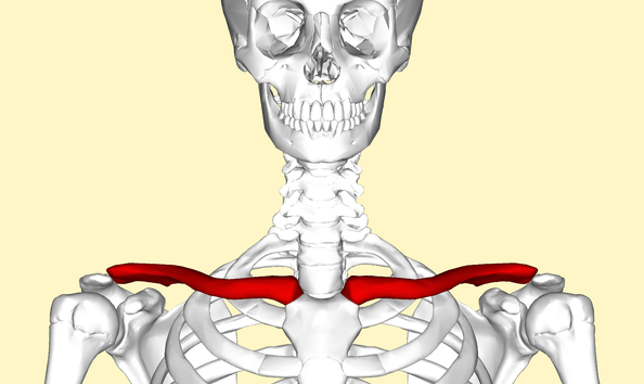 Clavicle How to Bench