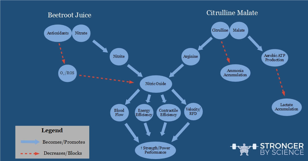 Pathways of nitric oxide formation