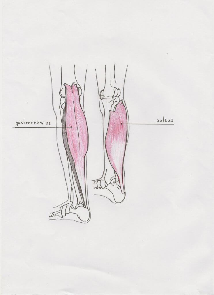 calves_soleus_and_gastroc
