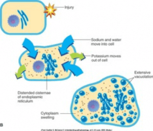 Cell swelling