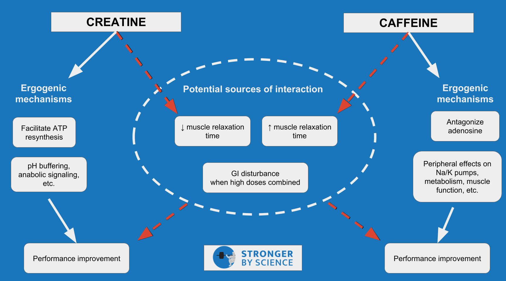 creatine and caffeine