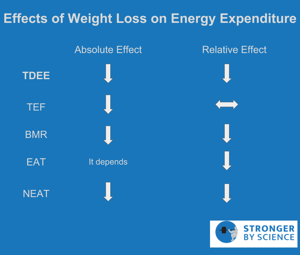 effects of weight loss on energy expenditure – metabolic adaptation