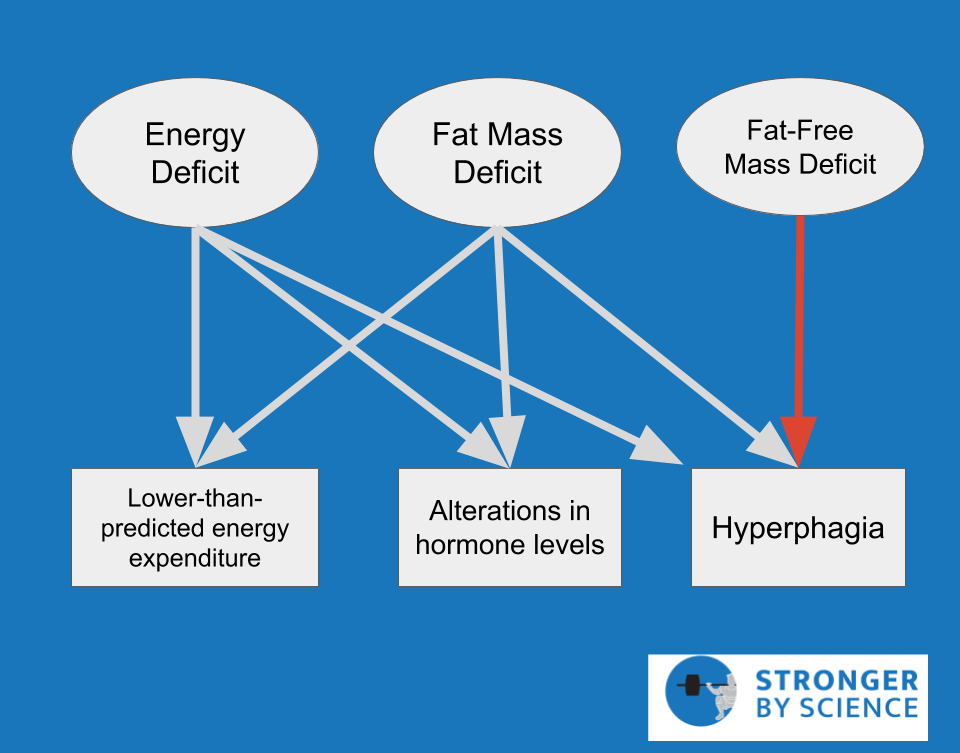 loss of fat-free mass while dieting –